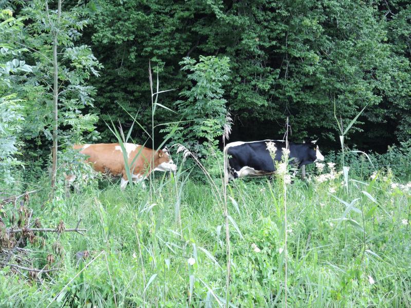 50_Im Bauerngarten von Frau Preisinger