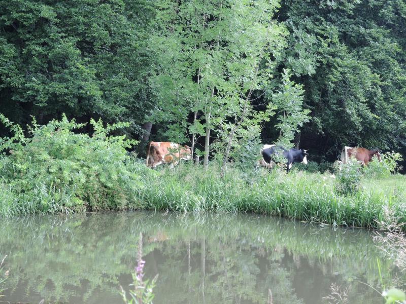 51_Im Bauerngarten von Frau Preisinger