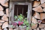 39_Im Bauerngarten von Frau Preisinger
