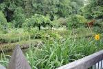 41_Im Bauerngarten von Frau Preisinger
