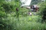 55_Im Bauerngarten von Frau Preisinger