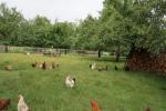 33_Im Bauerngarten von Frau Preisinger