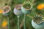 02_Pflanzen0708