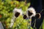 13_Pflanzen0708