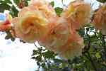 30_Pflanzen0708
