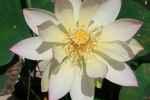 61_Pflanzen0708