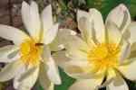 63_Pflanzen0708