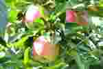 05_Pflanzen0910