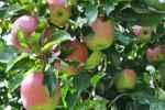 06_Pflanzen0910