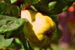 07_Pflanzen0910
