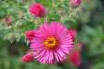 15_Pflanzen0910