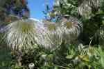 50_Pflanzen0910