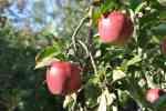 51_Pflanzen0910