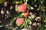 52_Pflanzen0910