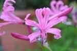 54_Pflanzen0910