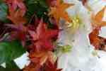 11_Pflanzen1011