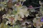 64_Pflanzenschönheit_DSC_0149
