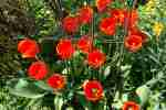 15_Pflanzen0304