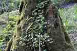 23_Pflanzen0304