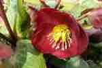 40_Pflanzen0304