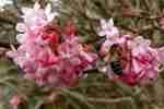 42_Pflanzen0304