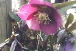 8_Pflanzen0304