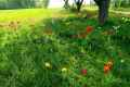 18_Pflanzen0304