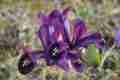 2_Pflanzen03